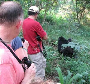 clients tracking gorillas in bwindi national park