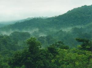 bwindi the home of mountain gorillas
