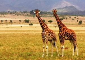 The Big 6 Safari Tour To Murchison Falls National Park